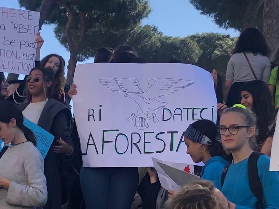 Photo of La Corte Costituzionale dichiara legittima la soppressione del Corpo Forestale dello Stato