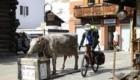 Primo giorno: Giacomo in viaggio dalla Valtellina verso il Trentino per raggiungere Yanez - Foto FB @Giacomo Meneghello