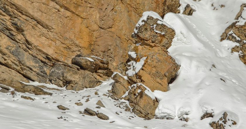 snow leopard, leopardo delle nevi, saurabh desai, himalaya, mimetismo, fotografia