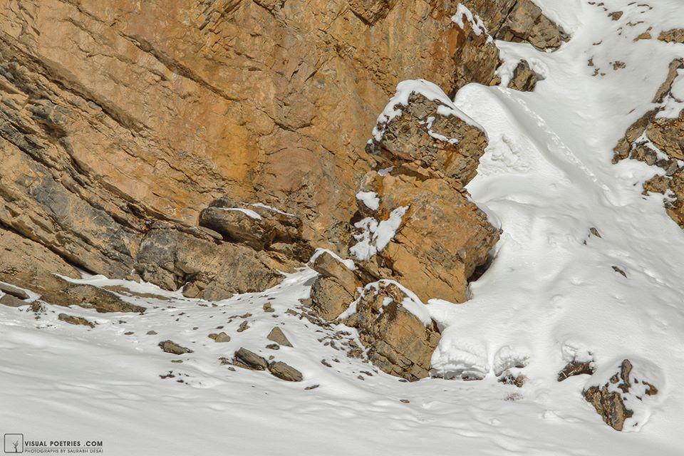 Photo of I leopardi delle nevi campioni di mimetismo. Quattro fantastici scatti di Saurabh Desai