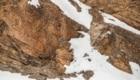 Dov'è il leopardo? Nascosto dietro le rocce sul limitare della zona innevata - Foto FB @Saurabh Desai