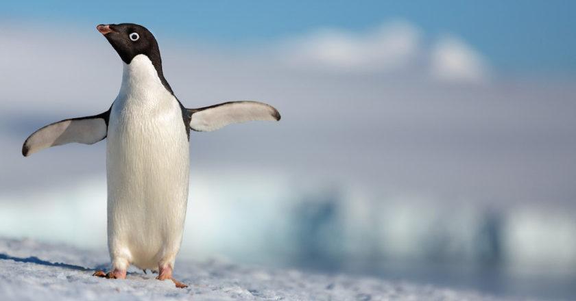 penguins, disneynature, documentario, walt disney studios, pinguini, pigoscelidi, antartide