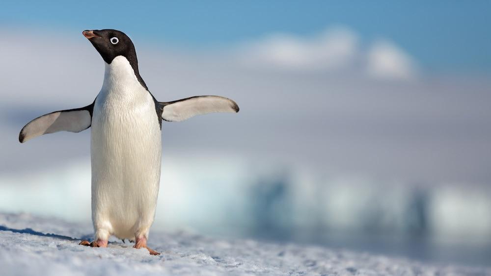 """Photo of """"Penguins"""". Disney celebra l'Earth Day con l'uscita del suo ultimo esilarante documentario"""