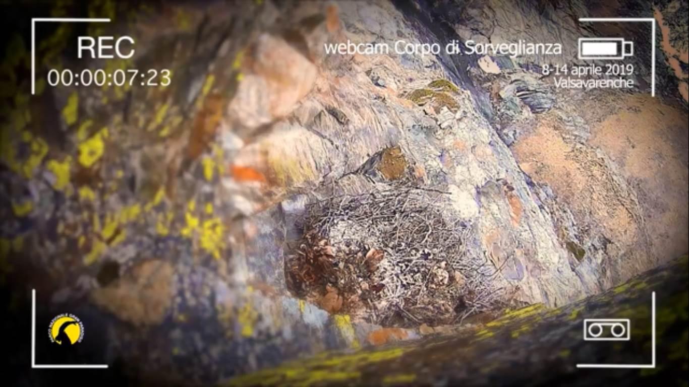 Photo of Valsavarenche. Il piccolo gipeto Avrì cresce bene