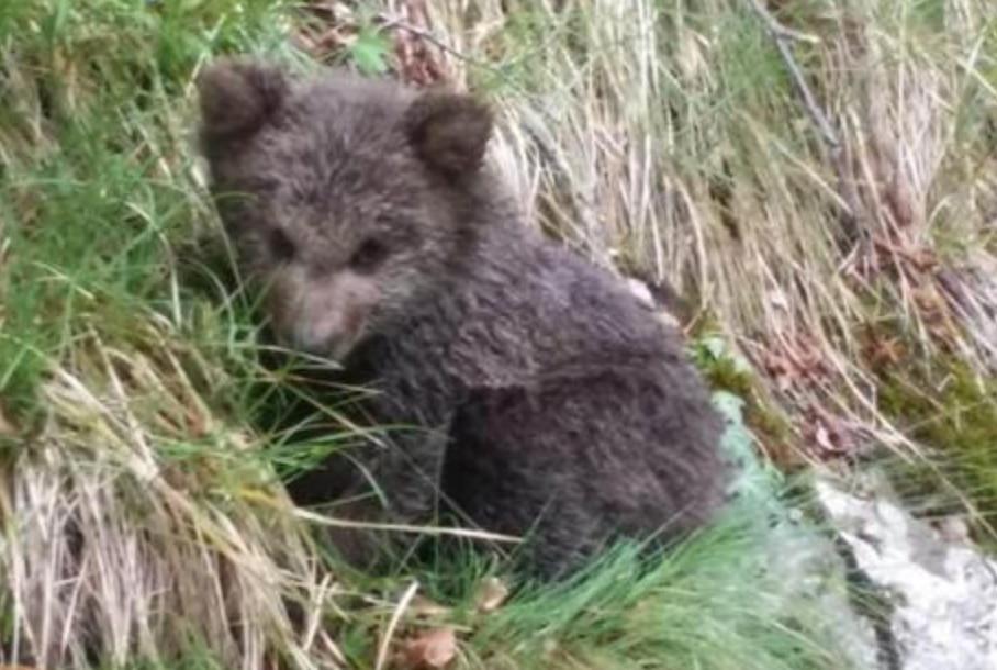 Photo of Trentino, recuperato orsetto di 5 mesi in stato di deperimento