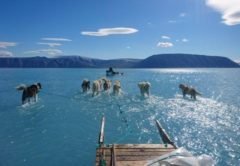 groenlandia, cani da slitta, ghiaccio, riscaldamento globale, meteorologia