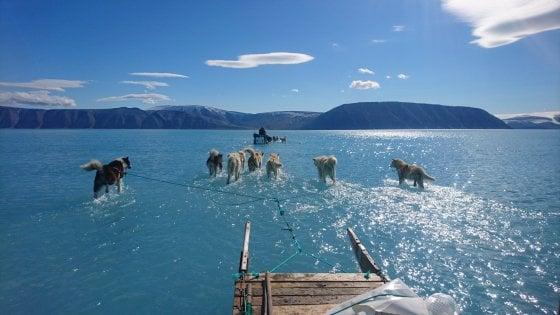 Photo of Groenlandia. I ghiacci si sciolgono in anticipo e i cani da slitta corrono sull'acqua