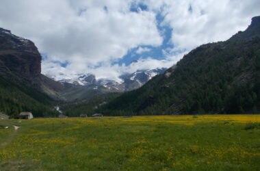 alpi, cambiamento climatico, riscaldamento globale, vegetazione, migrazione, foreste