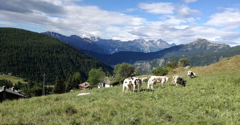 legambiente, bandiere, carovana delle alpi, tutela, ambiente
