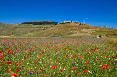 castelluccio di norcia, fiorita, webcam, terre mutate