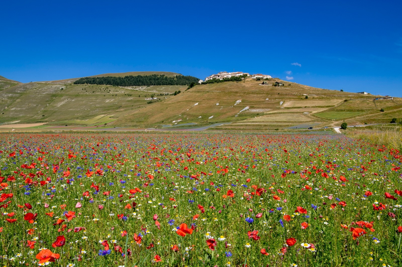 Photo of Riaccesa la webcam sulla Piana di Castelluccio di Norcia. Tutto pronto per la fioritura