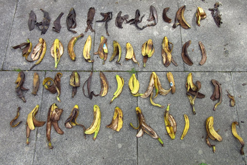 ben nevis, banana, divieto di abbandono