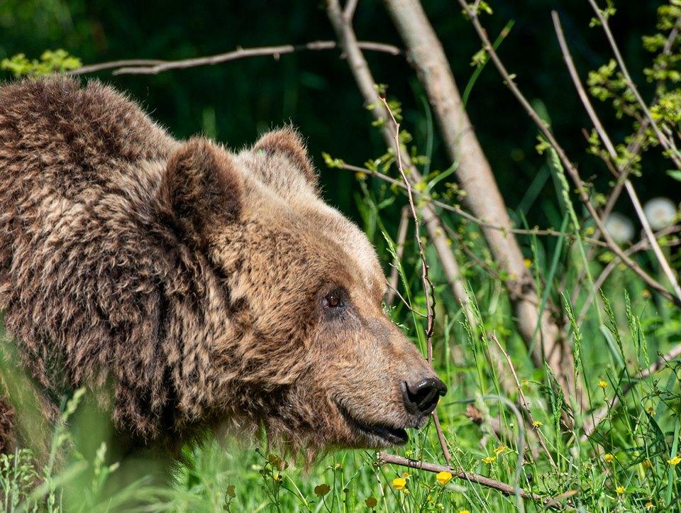 Photo of Numero chiuso sui sentieri PNALM a tutela di orso e camoscio