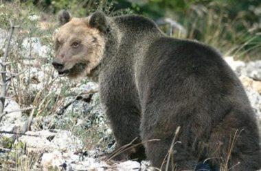 sergio costa, m49, orso, cattura, maurizio fugatti, trento