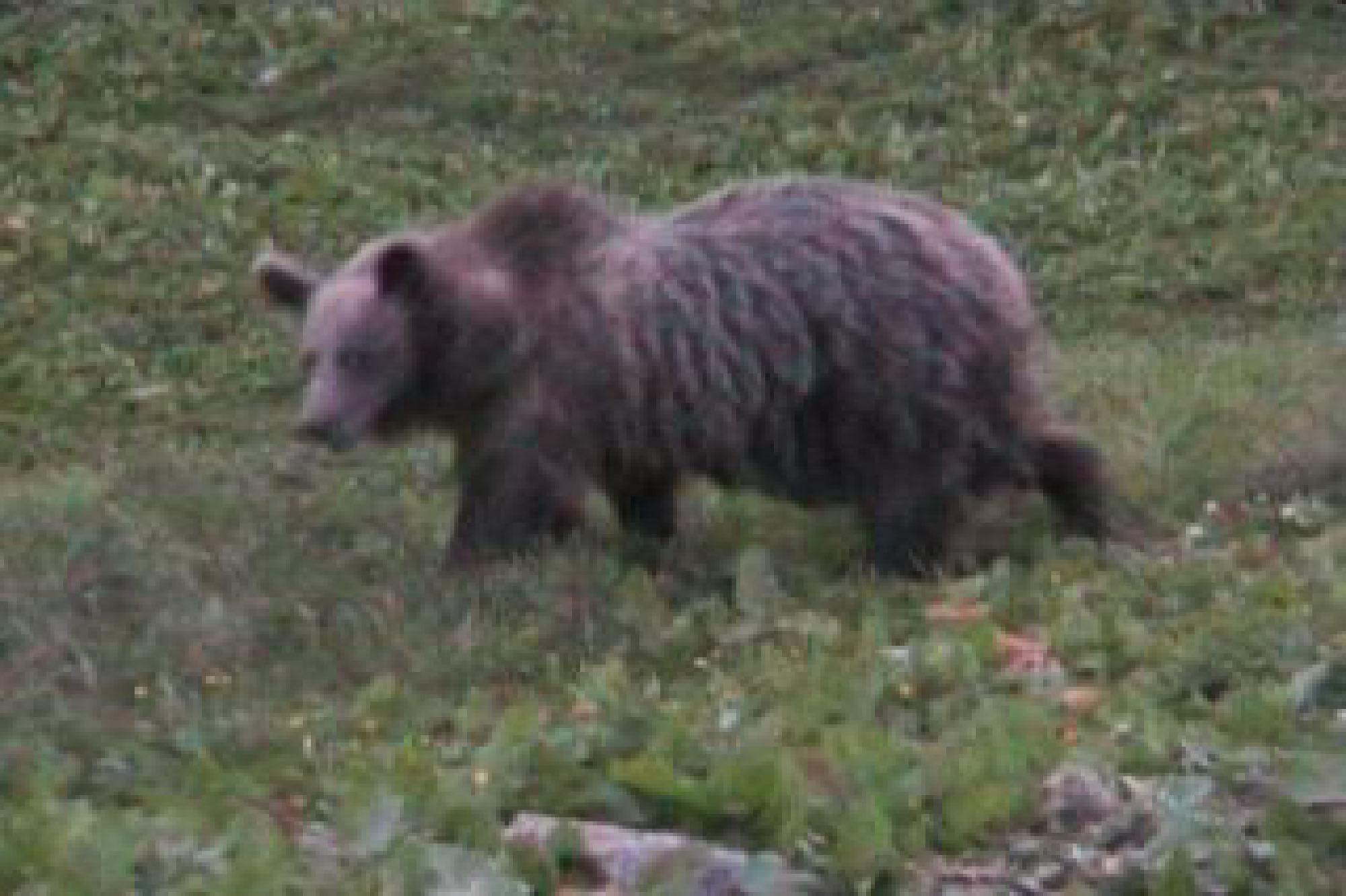 Photo of L'orso M49, il presidente Fugatti e la monnezza di Roma