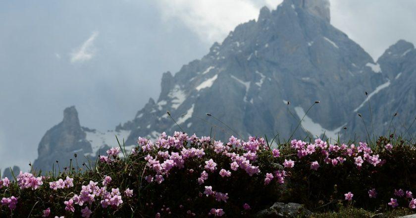 Il Cimon della Pala dalla Baita Segantini. Foto Stefano Ardito