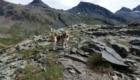 Axel, il beagle delle montagne. Foto @ Walter Beretta