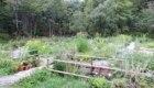 Il giardino della flora montana del rifugio Esperia - Foto FB @Intorno al Monte Cimone