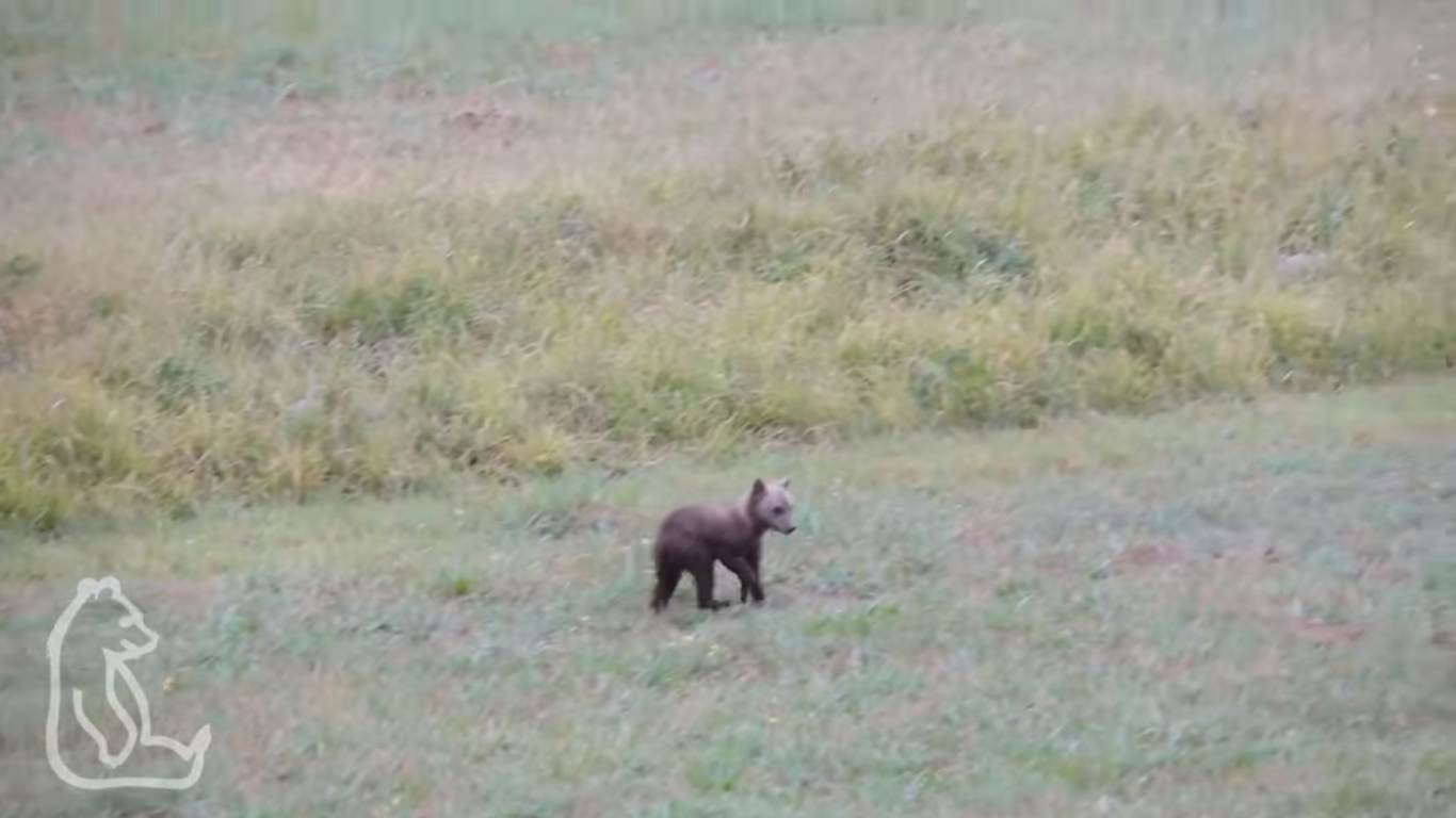 Photo of Una storia a lieto fine dal PNALM. Cucciolo di orso marsicano ritrova la madre
