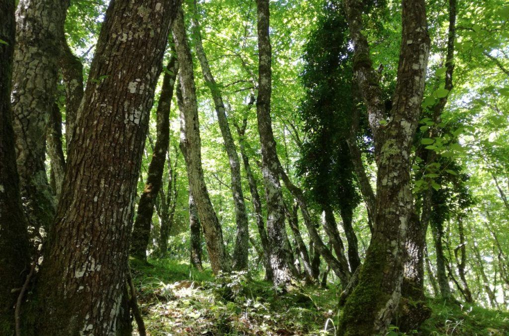giornata degli alberi, ministro costa