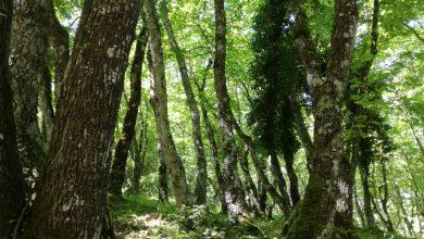 """Photo of Giornata degli Alberi 2019. """"Piantare un albero è dare vita alla vita"""""""