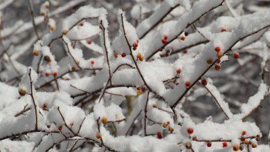 """Photo of Neve e vento forte. In arrivo sull'Italia la """"tempesta di Santa Lucia"""""""