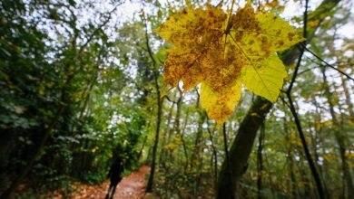 Photo of Oli essenziali nei boschi. Come variano nello spazio e nel tempo
