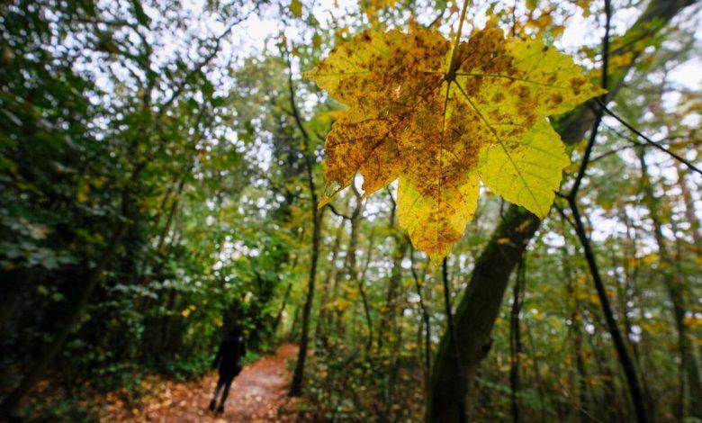 boschi, benessere
