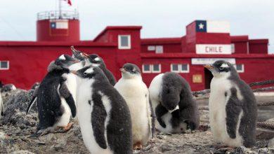 Photo of La prima università in Antartide sarà italiana