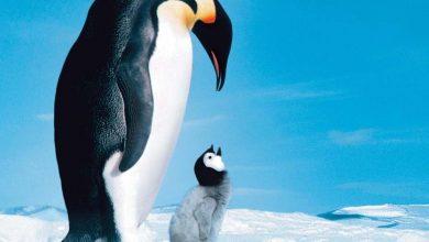 """Photo of """"La marcia dei pinguini"""" – Mountain and Chill"""