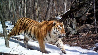 Photo of Google. Intelligenza artificiale e fototrappole per salvaguardare la fauna selvatica