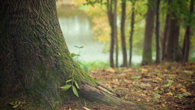 Photo of Regione Lombardia: bando di 18 milioni di euro per prevenire danni alle foreste