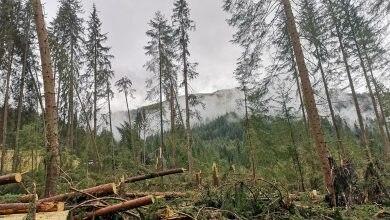 Photo of Le foreste dopo la tempesta Vaia. Rewilding o gestione attiva?
