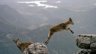 Photo of Si celebra oggi la Giornata Mondiale della Natura Selvatica