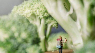 Photo of Tra foreste di broccoli e canyon di pancake. Le fantastiche avventure indoor di Erin Sullivan