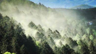 Photo of Trentino. Suggestive nubi di polline segnano la rinascita dei boschi dopo Vaia