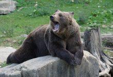 Photo of Gli orsi si svegliano dal letargo, il vademecum della Provincia di Trento