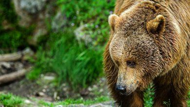 Photo of Trentino, l'incontro tra bambino e orso: è così che bisogna comportarsi. Il video virale