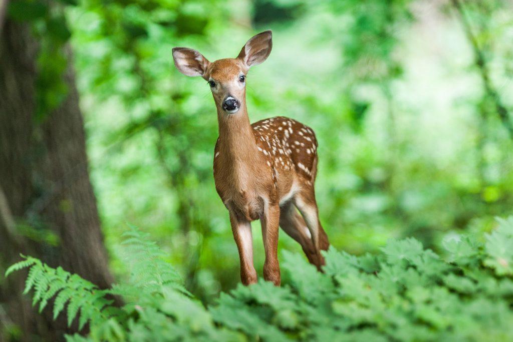 biodiversità, giornata internazionale