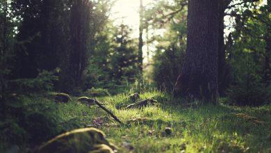 Photo of Estate in bosco. Dieci regole per la salvaguardia della natura