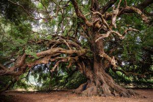 alberi, concorso fotografico