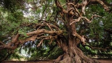 """Photo of """"Rimettiamoci in cammino"""". Un concorso fotografico alla scoperta degli alberi monumentali d'Italia"""