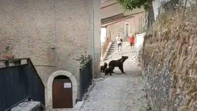 Photo of PNALM. L'orsa Amarena e i 4 cuccioli a spasso per il borgo