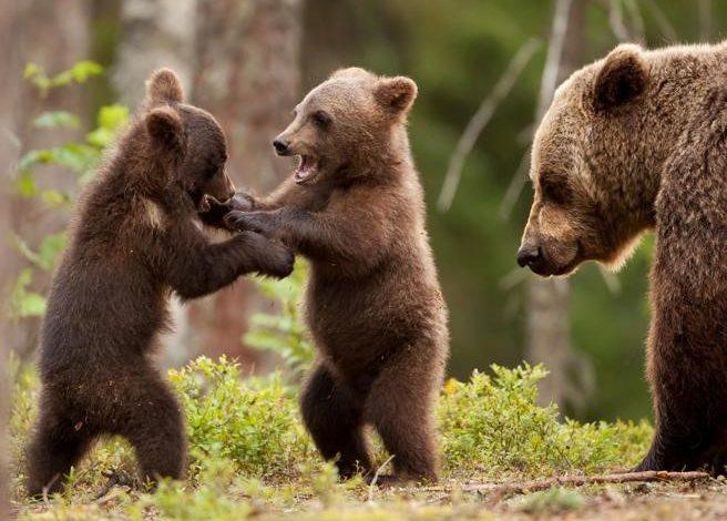 orsa, trentino