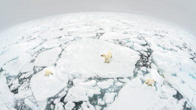 Photo of WWF: in mezzo secolo perso il 68% della popolazione selvatica mondiale