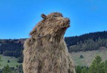 Photo of Trentino. Sul Monte Bondone arriva un orso gigante con la valigia