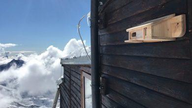 Photo of A Capanna Gnifetti una cassetta-nido per monitorare il fringuello alpino