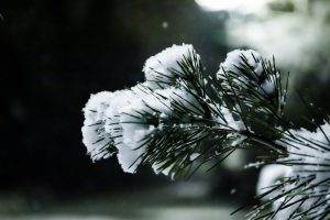 nevicate, alpi, meteo