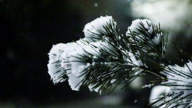 Photo of In arrivo abbondanti nevicate sulle Alpi