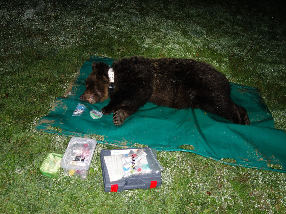 orsa, parco della majella